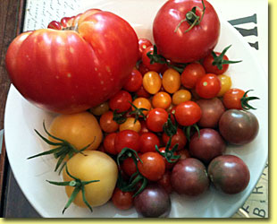 Picture: Tomato Lucie, Ball, Blondkopfchen, Cherry More heirlooms from customer Diana!