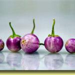 Picture: Eggplant Thai Lavender Frog Eggs