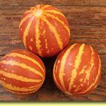 Picture: Melon Rich Sweetness
