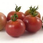 Picture: Tomato Napa Rose